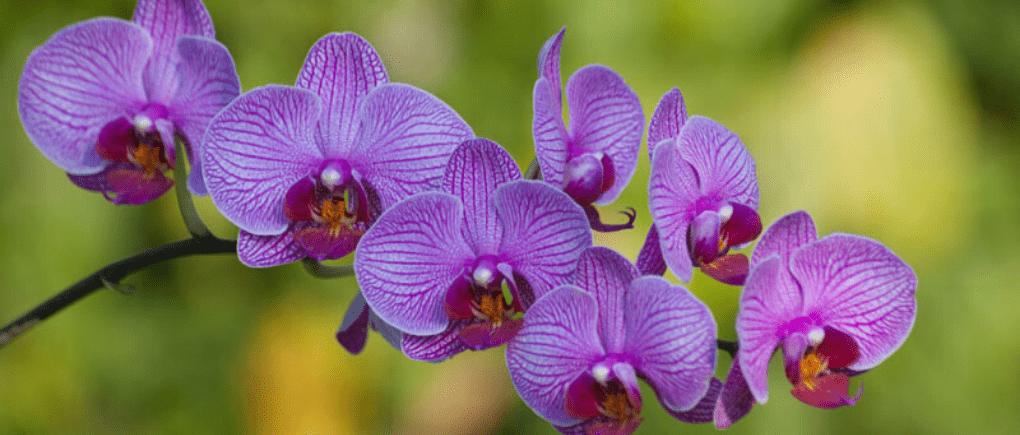 Orquídeas, flores.