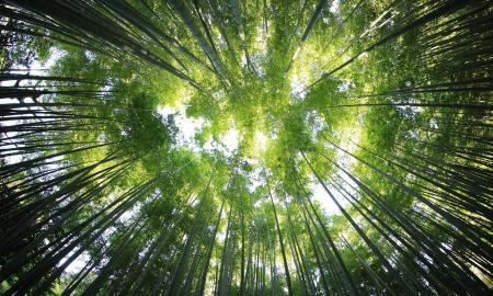 sustentabilidad energética empresarial