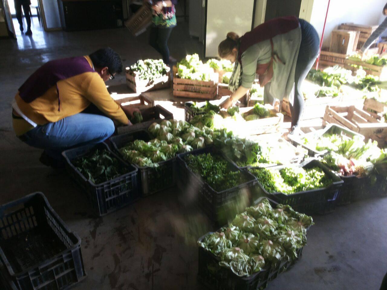 verdura en cajones